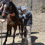 Confirming horse health